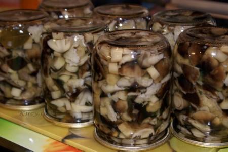 Грибы на зиму рецепты приготовления с фото